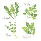 Varia illustrazione delle erbe illustrazione vettoriale