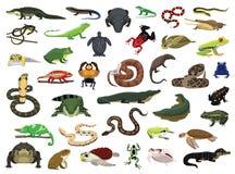 Varia illustrazione di vettore dell'anfibio e del rettile illustrazione di stock