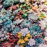 Varia pianta succulente nel fondo variopinto fotografia stock libera da diritti