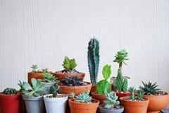 Varia piccola raccolta succulente delle piante da vaso con il fondo bianco della parete fotografia stock