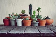 Varia piccola raccolta succulente delle piante da vaso sulla tavola di legno d'annata Immagini Stock Libere da Diritti