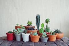 Varia piccola raccolta succulente delle piante da vaso sulla tavola di legno d'annata Fotografia Stock