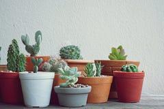 Varia piccola raccolta succulente delle piante da vaso sulla tavola di legno d'annata con il fondo dello spazio libero Immagini Stock