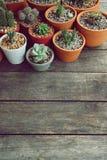 Varia piccola raccolta succulente delle piante da vaso sulla tavola di legno d'annata con il fondo dello spazio libero Immagine Stock Libera da Diritti