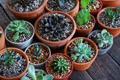 Varia piccola raccolta succulente delle piante da vaso sulla tavola di legno d'annata con il fondo dello spazio libero Immagini Stock Libere da Diritti