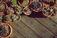 Varia piccola raccolta succulente delle piante da vaso sulla tavola di legno d'annata con il fondo dello spazio libero Immagine Stock
