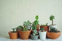 Varia piccola raccolta succulente delle piante da vaso sulla tavola di legno d'annata con il fondo dello spazio libero Fotografie Stock