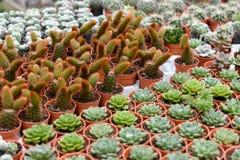 Varia a planta do cacto nas montanhas de Cameron da exploração agrícola Foto de Stock Royalty Free