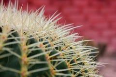 Varia a planta do cacto nas montanhas de Cameron da exploração agrícola Fotografia de Stock Royalty Free
