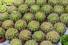 Varia a planta do cacto nas montanhas de Cameron da exploração agrícola Fotos de Stock Royalty Free