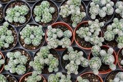 Varia a planta do cacto nas montanhas de Cameron da exploração agrícola Imagem de Stock Royalty Free