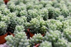 Varia a planta do cacto nas montanhas de Cameron da exploração agrícola Foto de Stock