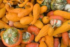 Varia zucca (arancio) Fotografia Stock Libera da Diritti