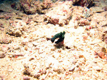 Variable Neon SeaSlug Royalty Free Stock Photography