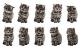 variación del gatito en el fondo blanco Fotos de archivo libres de regalías