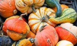 Variación orgánica de las calabazas Fondo del día de la acción de gracias de Halloween Cosecha rayada anaranjada de las verduras  Fotos de archivo libres de regalías
