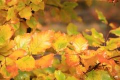 Variaciones del otoño. Arte de la naturaleza. Foto de archivo