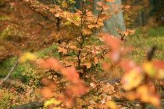 Variaciones del otoño. Arte de la naturaleza. Imagen de archivo libre de regalías