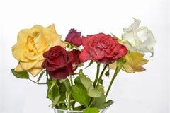 Variados dos colores de Ramo de rosas de Fotos de Stock Royalty Free