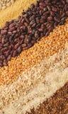 Variante der Getreide Lizenzfreies Stockfoto