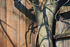 Varianten van hout Stock Afbeelding
