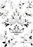 Variants flourishes decorative details Royalty Free Stock Images