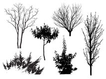 Variants of the trees Stock Photo