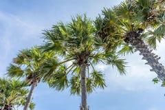 Varias de la playa de la palmera Imagenes de archivo
