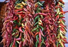 Varias especies de pimientas de chile Fotografía de archivo