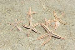 Varias estrellas de mar en agua poco profunda fotografía de archivo