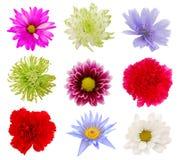 Varias flores coloridas Fotos de archivo