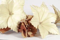 Varias flores de papel, crema y marrón Fotos de archivo