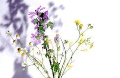 Varias hierbas Imágenes de archivo libres de regalías