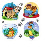 Varias imágenes 1 de los animales domésticos Imágenes de archivo libres de regalías