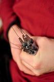 Varias jeringuillas en las manos masculinas se cierran para arriba Foto de archivo libre de regalías
