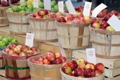 Varias manzanas Foto de archivo libre de regalías