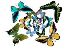 Varias mariposas Fotos de archivo