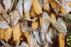 Varias mazorcas de maíz secadas amarillas foto de archivo libre de regalías