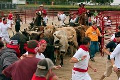 Varias personas funcionadas con con los toros en Georgia Event Fotos de archivo libres de regalías
