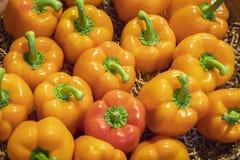Varias pimientas anaranjadas deliciosas se cierran para arriba Imágenes de archivo libres de regalías