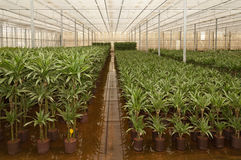 Varias plantas de la casa del hydroculture Imagen de archivo