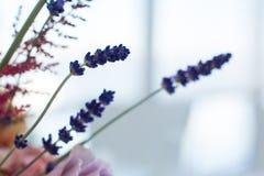 Varias ramas de la lavanda fresca con las rosas rosadas en fondo Decoraci?n del acontecimiento con las flores frescas fotos de archivo