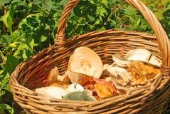 Varias setas del verano en una cesta Fotografía de archivo libre de regalías