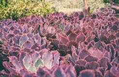 Varias variedades de succulents fotos de archivo