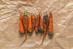 Varias zanahorias sucias en un papel arrugado Imágenes de archivo libres de regalías