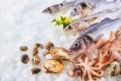 Variation av den rå fisken och skaldjur på säng av is Royaltyfri Foto