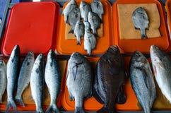 Variation av fisken royaltyfri bild