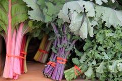 Variation av grönsallat på den lokala bondemarknaden Royaltyfria Foton