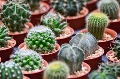 Variation av kaktuns Royaltyfri Fotografi