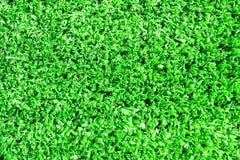 Variation av konstgjort gräs eller dess typer Royaltyfri Foto